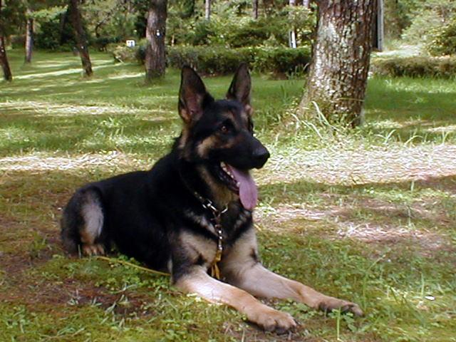 警察犬お受験日記 ・・jakkiの訓練記録 2000/6/28からあなたは番目の訪問者です 報告