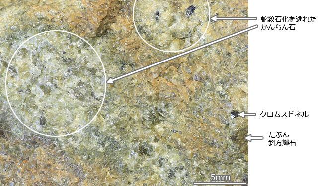 採集地:士別市 士別のかんらん岩です。士別の幌加内オフィオライトが見られる川原で採集しました。
