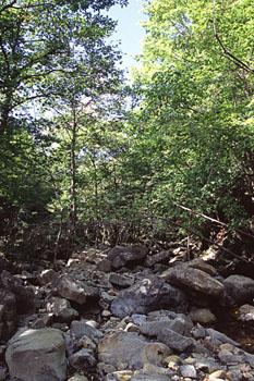 幌満のかんらん岩 TOP PAGE 石の展示・探訪記 名前別 産地別 鉱山探訪 岩石鉱物トレッキ